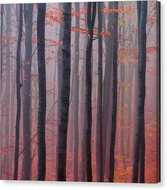 Forest Barcode Canvas Print