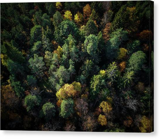 Aerial Canvas Print - Forest Landscape - Aerial Photography by Nicklas Gustafsson