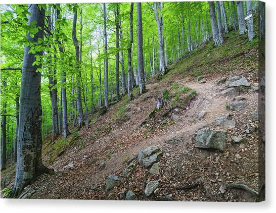 Canvas Print featuring the photograph Forest On Balkan Mountain, Bulgaria by Milan Ljubisavljevic