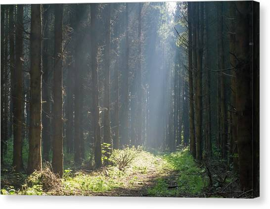 Canvas Print featuring the photograph Forrest And Sun by Anjo Ten Kate
