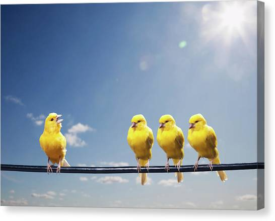 Four Canaries On Wire, One Bird Chirping Canvas Print