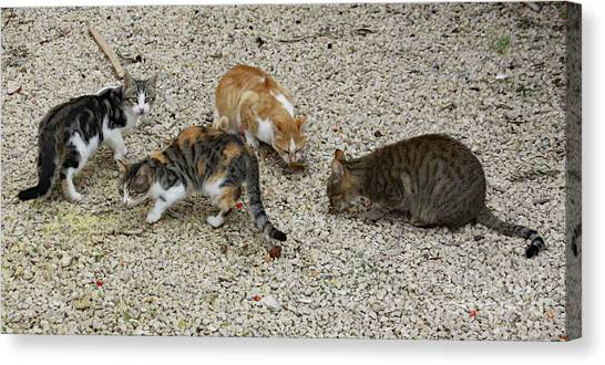Canvas Print featuring the photograph Four Foraging Felines by PJ Boylan