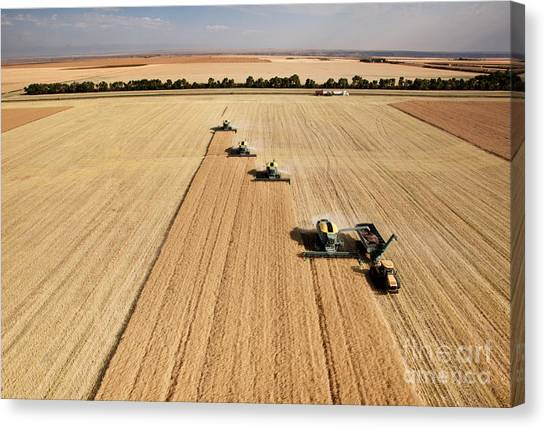 Big Canvas Print - Four Harvesters Combing On A Prairie by Tyler Olson