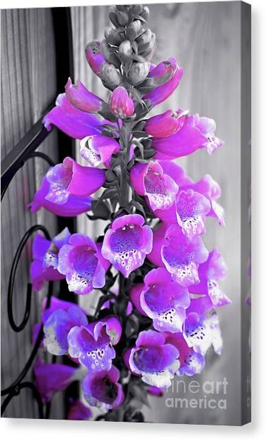 Canvas Print featuring the photograph Foxglove by Patti Whitten