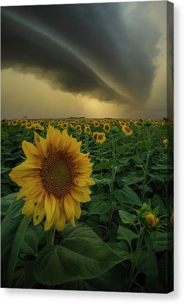 Canvas Print featuring the photograph Frailty  by Aaron J Groen