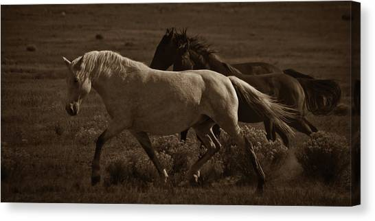 Canvas Print featuring the photograph Freedom II by Catherine Sobredo