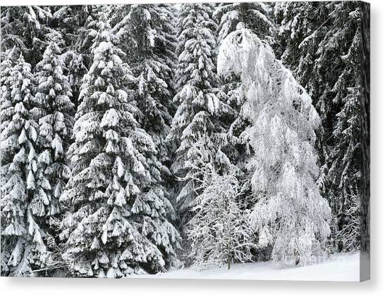 Fallen Tree Canvas Print - French Alps, Snow Covered Fir Trees In Winter by French School