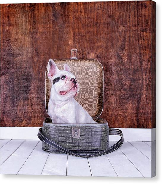 French Bulldog Puppy Inside An Old Canvas Print by Maika 777