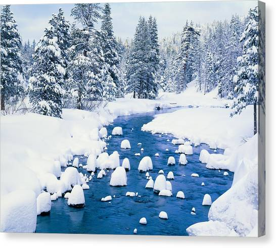 Fresh Winter Snow Covers Forest With Canvas Print