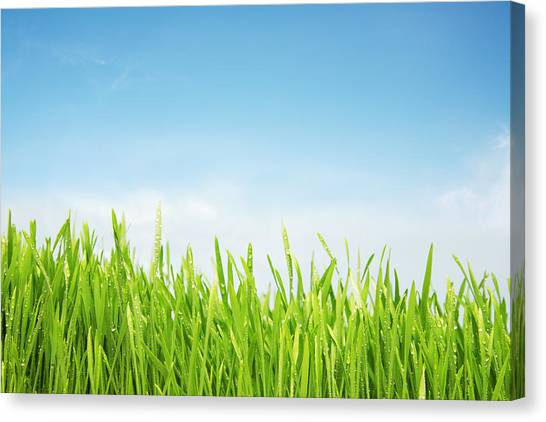 Blade Of Grass Canvas Print - Freshly Watered Grassy Field by Nico blue