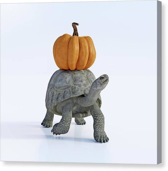 Tortoises Canvas Print - Friends The Tortoise And The Pumpkin by Betsy Knapp