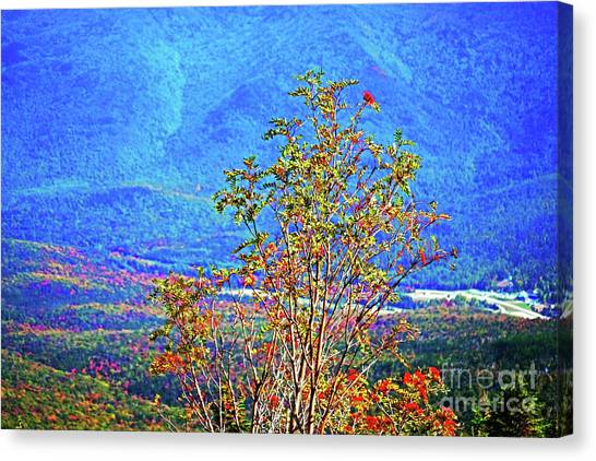 Canvas Print featuring the photograph From Mount Washington by Patti Whitten