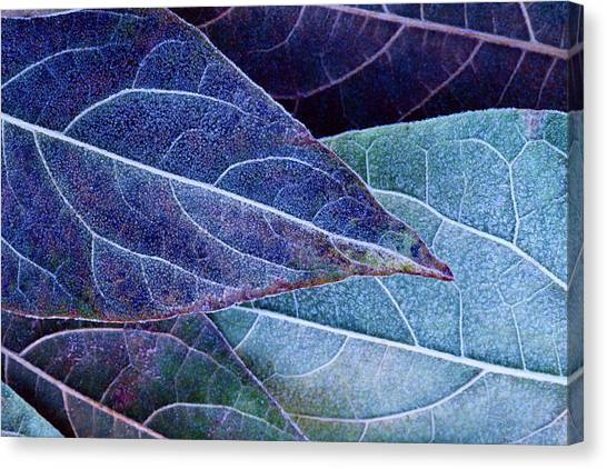 Frosty Leaves Canvas Print by Ithinksky
