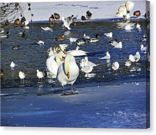 Frozen Lake. Canvas Print