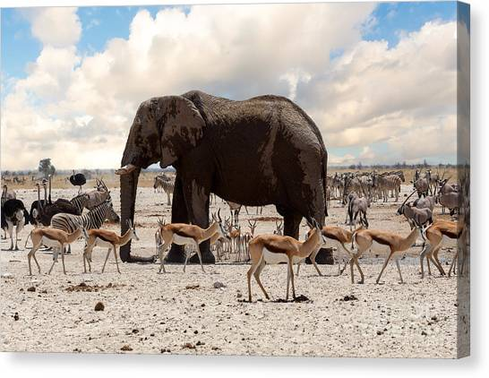 Southern Africa Canvas Print - Full Waterhole With Elephants, Zebras by Artush