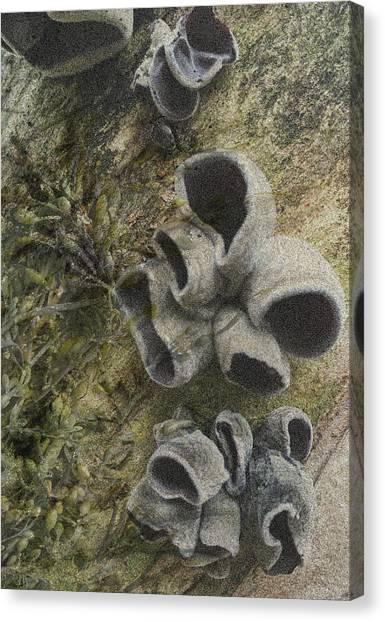 Fungi And Algae Canvas Print