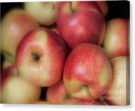 Canvas Print featuring the photograph Gala Apples by Ann Jacobson