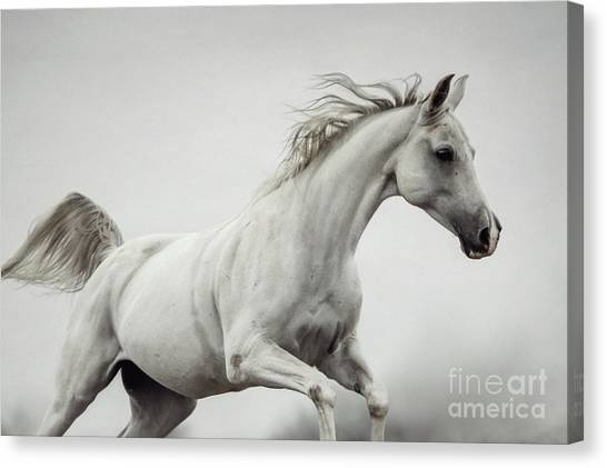 Canvas Print featuring the photograph Galloping White Horse by Dimitar Hristov