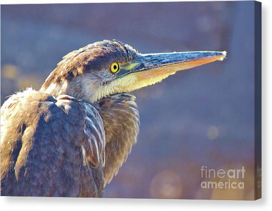 Gbh Waiting For Food Canvas Print