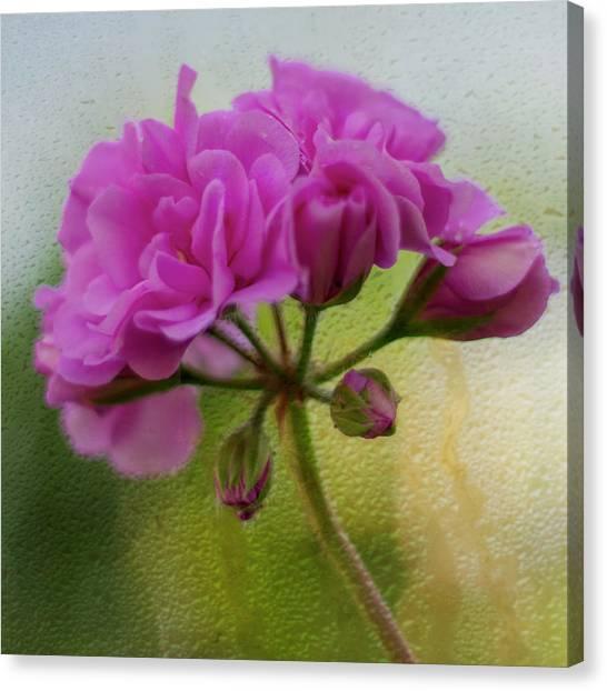 Geranium Rain  Canvas Print