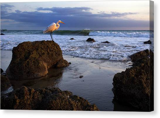 Giant Egret Canvas Print