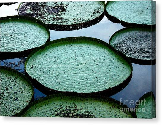 South American Canvas Print - Giant Lily Pads In The Amazon by Nina B