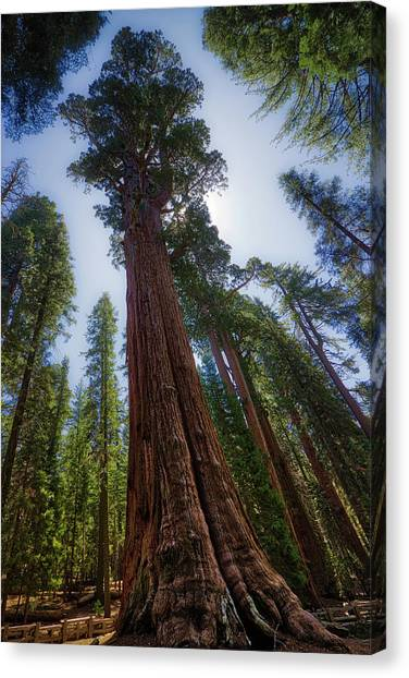Giant Sequoia Tree Canvas Print