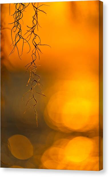 Gilded Moss Canvas Print