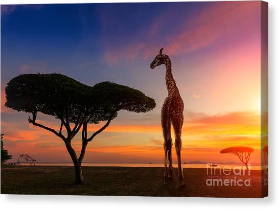 Bush Canvas Print - Giraffes In The Savannah At Sunset by Weerasak Saeku