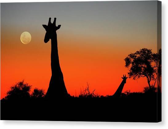 Giraffes Canvas Print by Steve Allen