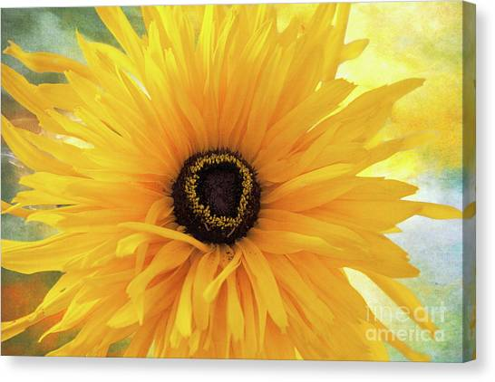 Canvas Print featuring the photograph Gloriosa Daisy by Ann Jacobson