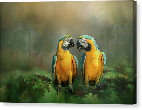 Gold And Blue Macaw Pair Canvas Print