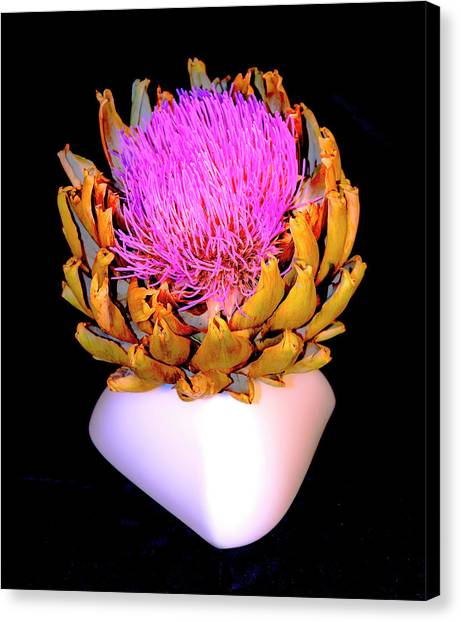 Gold And Pink Canvas Print