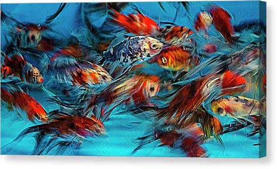 Gold Fish Abstract Canvas Print