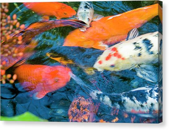 Gold Fish Canvas Print by By Ken Ilio