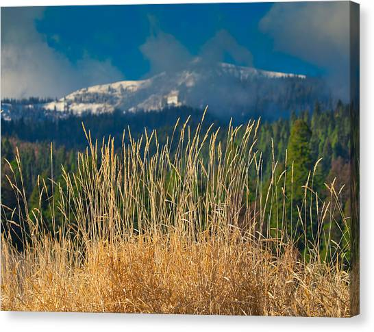 Gold Grass Snowy Peak Canvas Print