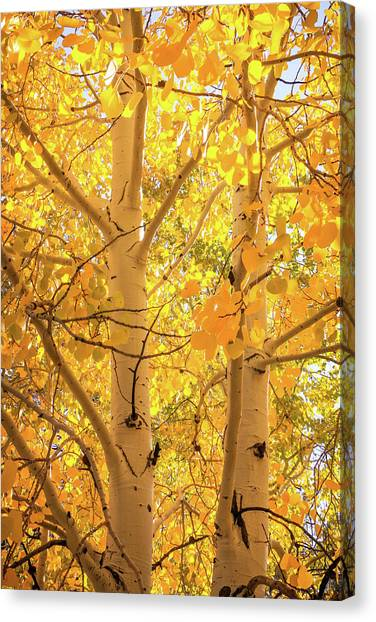 Golden Aspens In Grand Canyon, Vertical Canvas Print