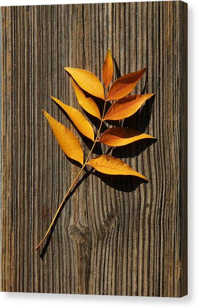 Canvas Print featuring the photograph Golden Autumn Leaves On Wood by Debi Dalio