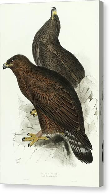 Golden Eagle Canvas Print - Golden Eagle by John Gould