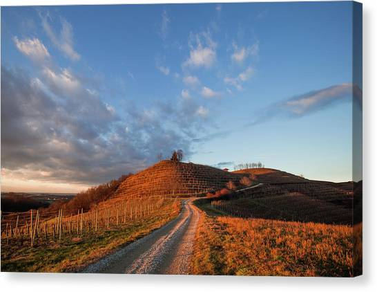 Canvas Print featuring the photograph Golden Hill by Davor Zerjav