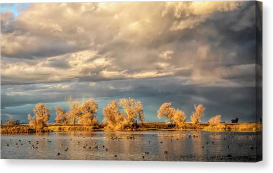 Golden Hour In The Refuge Canvas Print