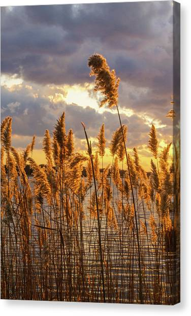 Marsh Grass Canvas Print - Golden Hour by Maryann Flick