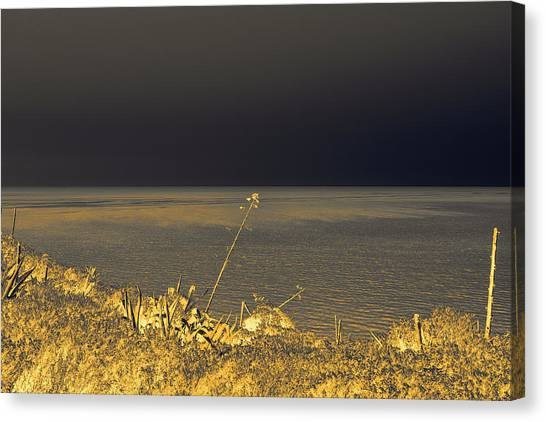 Golden Hues In The Night Canvas Print