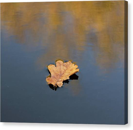 Canvas Print featuring the photograph Golden Leaf On Water by Scott Lyons