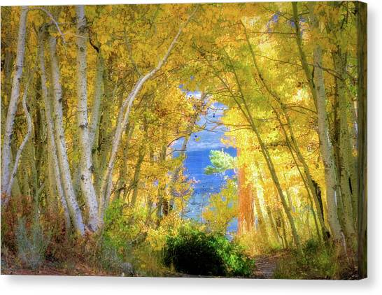 June Lake Canvas Print - Golden Pathway by Donna Kennedy
