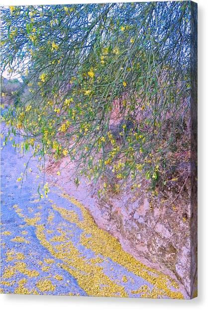 Golden Petals In A Desert Wash Canvas Print