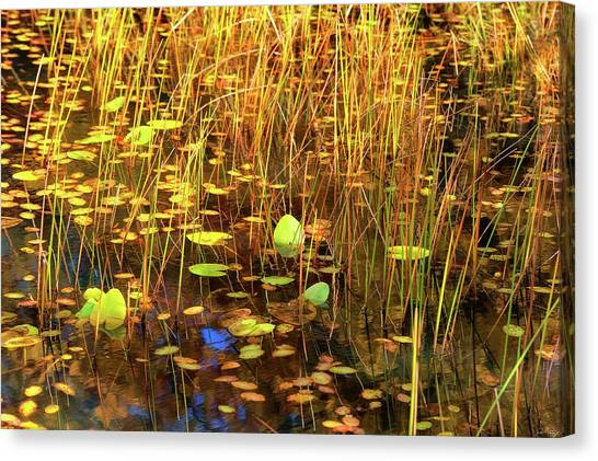Canvas Print featuring the photograph Golden Pond by Dee Browning
