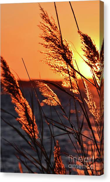 Canvas Print featuring the photograph Golden Reeds by Patti Whitten