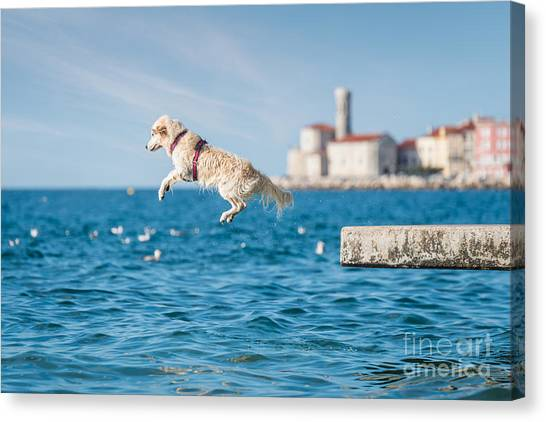 Golden Retriever Dog Jumping Into Sea Canvas Print by Sonsart