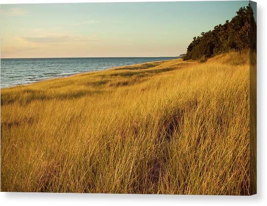 Golden Summer Dune Grass On Lake Canvas Print